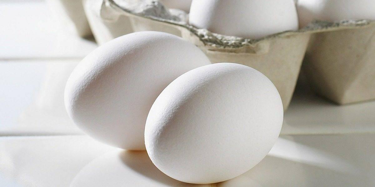 A albumina é um suplemento fabricado a partir da clara do ovo.